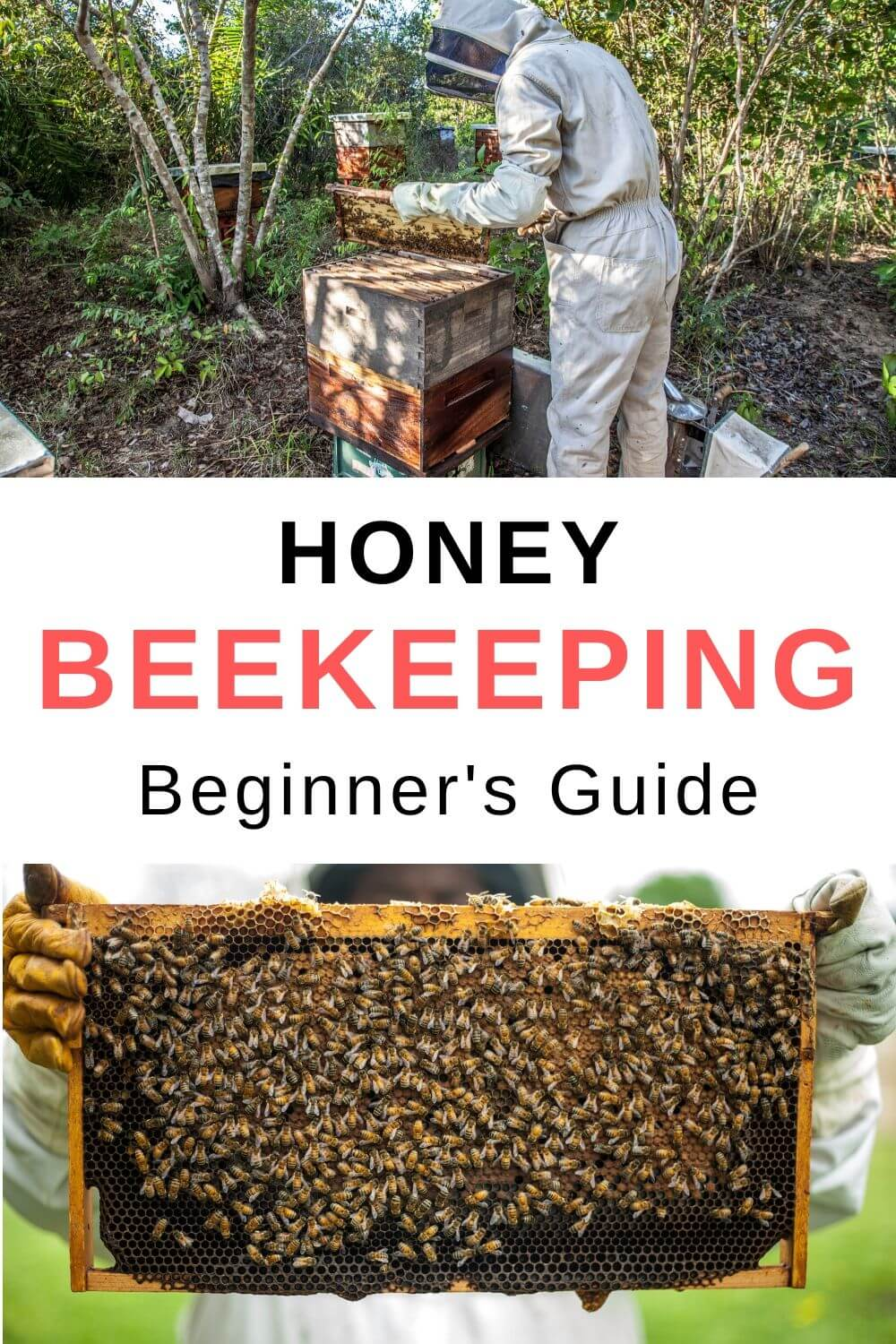 honey beekeeping beginner's guide